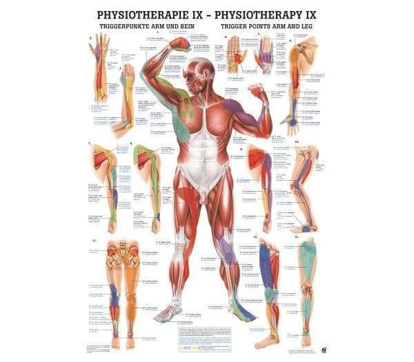 Lehrtafel Physiotherapie IX